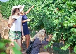sydney hens party wine tour
